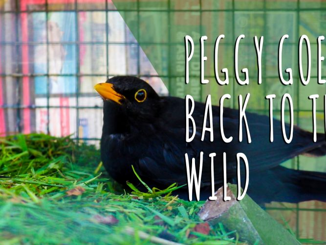 Peggy Goes Wild