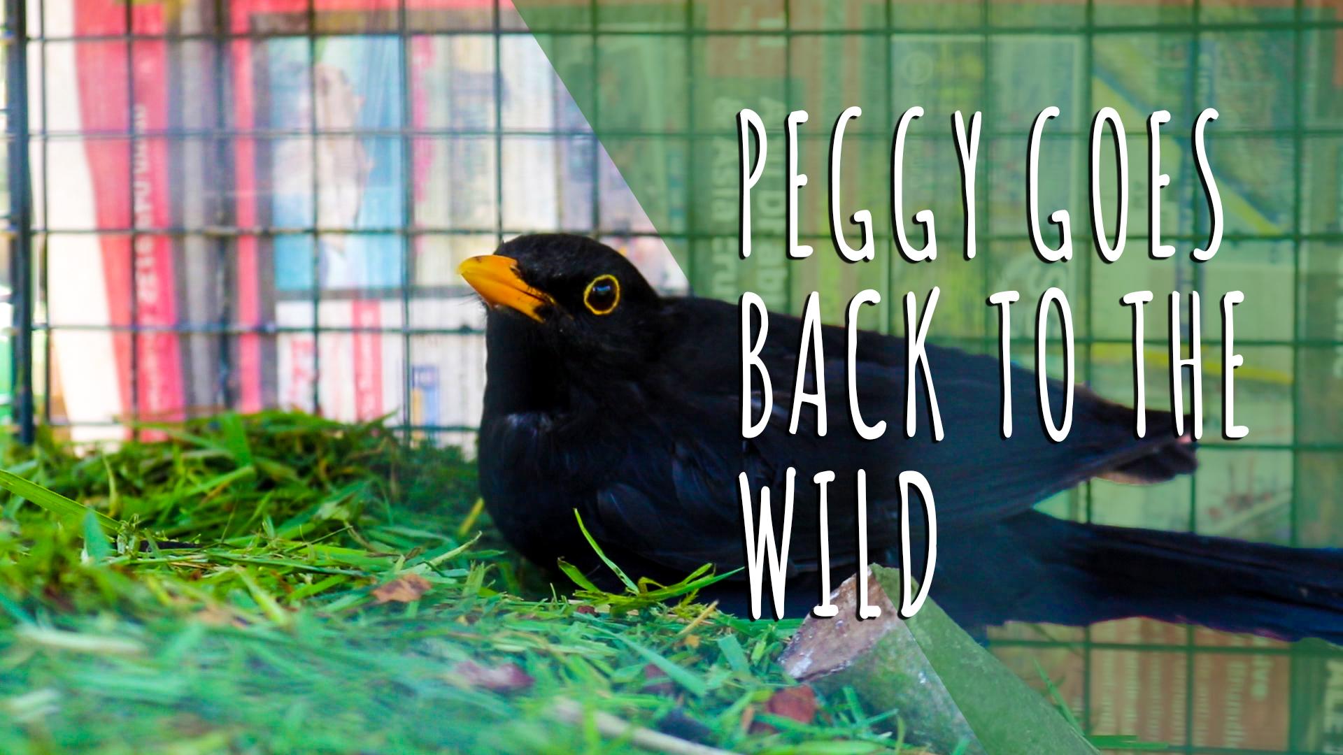 Peggy Goes Wild